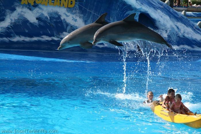 aqualand_delfineshow_inselteneriffa.com-14