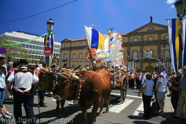 paseo_romero_inselteneriffa.com-65