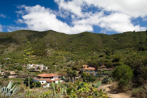 tierra_del_triego_www.inselteneriffa.com-4