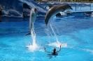 aqualand_delfineshow_inselteneriffa.com-17