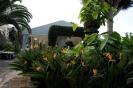 casa_lercaro_la_orotava_www.inselteneriffa.com-6
