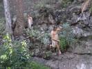 drachenbaum_park_icod_www.inselteneriffa.com-18