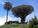 drachenbaum_park_icod_www.inselteneriffa.com-20