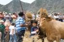 Fiesta del Trillo in El Palmar :: fiesta_del_trillo_www.inselteneriffa.com-17