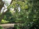 Jardin Botanico La Orotava :: jardin_botanico_la_orotava_www.inselteneriffa.com-10