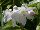 jardin_botanico_la_orotava_www.inselteneriffa.com-14