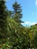 jardin_botanico_la_orotava_www.inselteneriffa.com-16