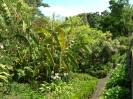 jardin_botanico_la_orotava_www.inselteneriffa.com-4