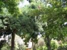 jardin_botanico_la_orotava_www.inselteneriffa.com-5