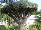 jardin_botanico_la_orotava_www.inselteneriffa.com-6
