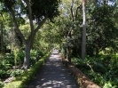 jardin_botanico_puerto_de_la_cruz_www.inselteneriffa.com-16