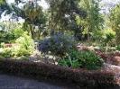jardin_botanico_puerto_de_la_cruz_www.inselteneriffa.com-19
