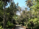 jardin_botanico_puerto_de_la_cruz_www.inselteneriffa.com-20
