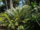 jardin_botanico_puerto_de_la_cruz_www.inselteneriffa.com-25