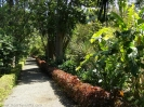 jardin_botanico_puerto_de_la_cruz_www.inselteneriffa.com-27