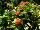 jardin_botanico_puerto_de_la_cruz_www.inselteneriffa.com-30