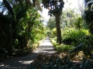 jardin_botanico_puerto_de_la_cruz_www.inselteneriffa.com-32