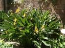 jardin_botanico_puerto_de_la_cruz_www.inselteneriffa.com-34