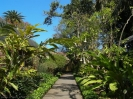 jardin_botanico_puerto_de_la_cruz_www.inselteneriffa.com-35