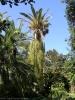 jardin_botanico_puerto_de_la_cruz_www.inselteneriffa.com-37
