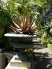 jardin_botanico_puerto_de_la_cruz_www.inselteneriffa.com-39