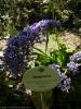 jardin_botanico_puerto_de_la_cruz_www.inselteneriffa.com-44