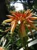 jardin_botanico_puerto_de_la_cruz_www.inselteneriffa.com-45