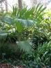 jardin_botanico_puerto_de_la_cruz_www.inselteneriffa.com-48