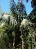 jardin_botanico_puerto_de_la_cruz_www.inselteneriffa.com-49