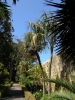 jardin_botanico_puerto_de_la_cruz_www.inselteneriffa.com-52