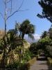 jardin_botanico_puerto_de_la_cruz_www.inselteneriffa.com-53