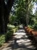 jardin_botanico_puerto_de_la_cruz_www.inselteneriffa.com-54