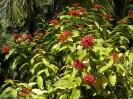 jardin_botanico_puerto_de_la_cruz_www.inselteneriffa.com-8