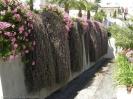 jardin_del_marquesado_la_orotava_www.inselteneriffa.com-3