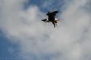 las_aguilas_vogelshows_www.inselteneriffa.com-18