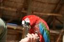 las_aguilas_vogelshows_www.inselteneriffa.com-33