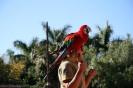 Las Aquilas Vogelshows :: las_aguilas_vogelshows_www.inselteneriffa.com-44
