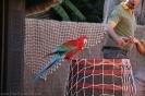 Las Aquilas Vogelshows :: las_aguilas_vogelshows_www.inselteneriffa.com-46
