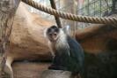 las_aquilas_jungle_park_inselteneriffa.com-22