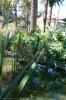 Parque de la Constiucion La Laguna :: parque_de-la_constiucion_la_laguna_www.inselteneriffa.com-15