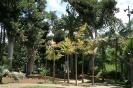 parque_garsia_sanabri_santa_cruz_www.inselteneriffa.com-17