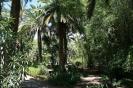 parque_garsia_sanabri_santa_cruz_www.inselteneriffa.com-3