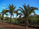 parque_sortija_puerto_de_la_cruz_www.inselteneriffa.com-11