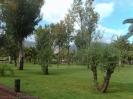 parque_sortija_puerto_de_la_cruz_www.inselteneriffa.com-1