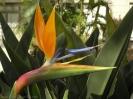 parque_taoro_puerto_de_la_cruz_www.inselteneriffa.com-13