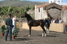 san_antonio_abad_los_silos_www.inselteneriffa.com-22