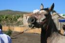 san_antonio_abad_los_silos_www.inselteneriffa.com-32