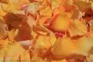 sandteppiche_la_orotava_2008_www.inselteneriffa.com-28