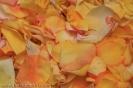 sandteppiche_la_orotava_2008_www.inselteneriffa.com-82