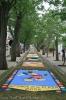 sandteppiche_tacoronte_2008_www.inselteneriffa.com-135